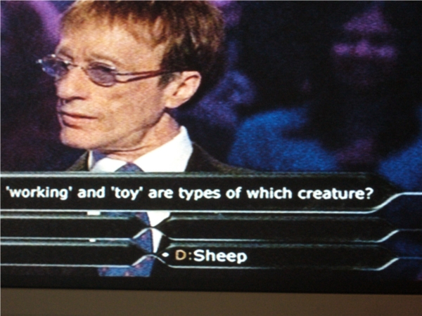 Robin Gibb at who wants to be a millionaire