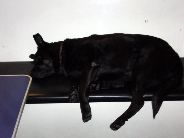 Blue Sky Hostel Glasgow, Hund Sheffie ist der Gaesteliebling